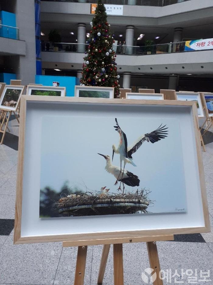 대전정부청사에서 열리고 있는 황새 사진 전시회 모습05.JPG